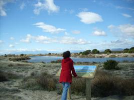 Paysage en bordure de l'étang de Salses-Leucate, sentier d'interprétation des Dosses (66). Crédits photos : Conseil Général Pyrénées-Orientales