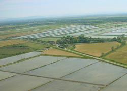 Paysage de rizières en Camargue. Crédit : S. Arques/Tour du Valat