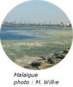 Malaïgue photo
