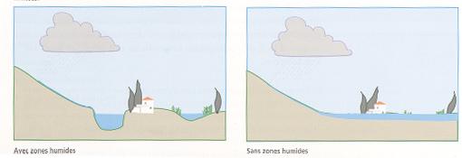 Figure 1 : le rôle de régulation des crues d'une lagune.