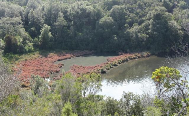 Rives occupées par une étroite bande de salicornes