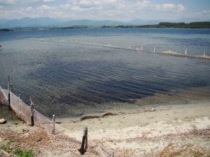 Plage de sable située sur l'étang d'Urbinu